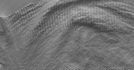 Texturing.xyz Iguana body #02 Texture Download